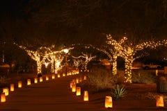 Park bij nacht Royalty-vrije Stock Afbeeldingen