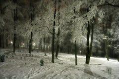 Park bij nacht stock fotografie