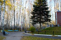 Park in a birch grove. Royalty Free Stock Photos