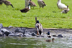 Free Park Birds Stock Photos - 5396493