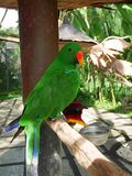 Park of birds and reptiles in Bali, a green parrot. Parrots in Bali, a parrot on a branch, a beautiful parrot, a parrot with a tuft, a beautiful bird, a bright Stock Photos