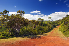 Park  Black river Gorge . Mauritius. The road in the wood, red earth, Park  Black river Gorge . Mauritius Stock Image