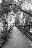 Park. Black and white photo, full of trees and tranquility royalty free stock photography