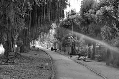 Park ,black and white. The park is a place of rest and exercise Stock Photos