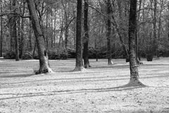 Park in black and white Royalty Free Stock Photography