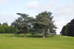 Park in Blenheim in the oxfordshire district - Wales Royalty Free Stock Photos