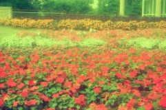 Park blisko Niagara spadków, Kanada zdjęcia royalty free