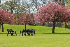 The Park in Blossom Stock Images