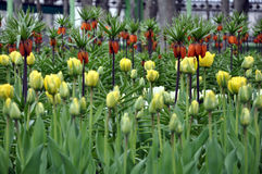 Park, Blumenbeet Stockfoto