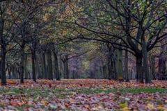 Park boslonden het UK Stock Afbeelding