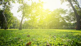 Park with bright grass and trees, sun glare. Relaxing fitness background. Spring-summer. Low angle shooting. Park with bright grass and trees, sun glare stock photos
