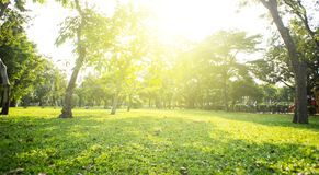 Park with bright grass and trees, sun glare. Relaxing fitness background. Spring-summer wallpaper. Low angle. Shooting stock images