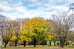 Park between buildings at autumns in Bratislava, Slovakia Royalty Free Stock Image