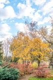 Park between buildings at autumns in Slovakia Royalty Free Stock Images