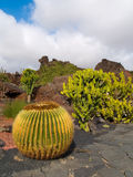 Park of cactuses. On Lanzarote, Canary islands Stock Photos
