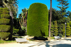 Park in Cadiz Stock Images