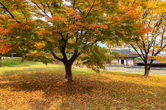 In the park of Changgyeonggung Palace Royalty Free Stock Photography