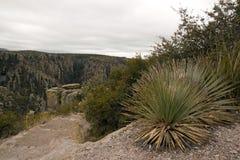 The park of Chiricahua - Arizona - the United States Stock Images