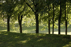 park ciepłego wieczorem obrazy royalty free