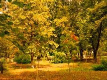 Park City för naturlandskaphöst träd Arkivfoto
