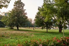 Park in the city. With green trees Royalty Free Stock Photography