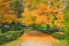 Park in Cluj-Napoca. The principle alee in the central park of Cluj-Napoca, Romania Royalty Free Stock Image