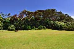 Park on coast Stock Photo