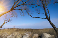 The park in cold season. Trees without foliage have bent over boulders and a dry cane Royalty Free Stock Images