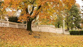 Park with colorful trees stock footage