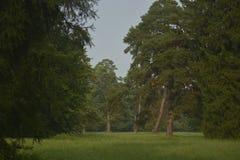 Park. Coniferous trees in a dendro, Ukraine Stock Image