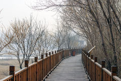 Park corridor. Shot in city park in BeiJing of china Royalty Free Stock Photo