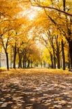 Park covered in fallen leaves, autumn scene Stock Photo