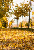Park covered in fallen leaves, autumn scene Royalty Free Stock Photos