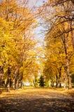 Park covered in fallen leaves, autumn scene Stock Image