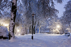 Park covered with snow at night. Royalty Free Stock Photo
