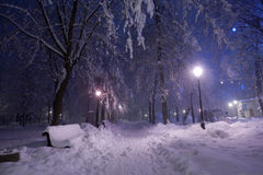 Park covered with snow at night. Stock Image