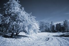Blue infrared landscape. Park in cyan tones infrared photo Royalty Free Stock Image