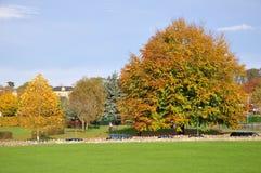 Park in de Herfst Royalty-vrije Stock Fotografie