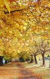 Park in de herfst Royalty-vrije Stock Foto