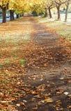 Park in de herfst Royalty-vrije Stock Foto's