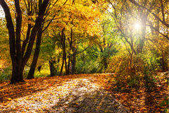 Park in de Herfst Royalty-vrije Stock Afbeelding