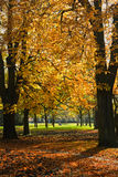 Park in de herfst met de bomen van de Kastanje Stock Fotografie