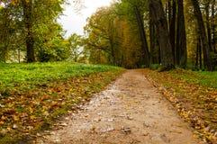 Park in de herfst met gevallen bladeren - de herfst bewolkt landschap Royalty-vrije Stock Fotografie