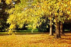 Park in de herfst met gevallen bladeren - de herfst zonnig landschap Royalty-vrije Stock Afbeeldingen