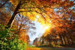 Park in de herfst, met zon en blauwe hemel stock foto