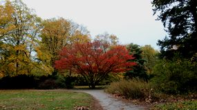Park De Kleurrijke Dalende Bladeren van de seizoenverandering stock foto's