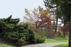 Park in de lente Royalty-vrije Stock Foto