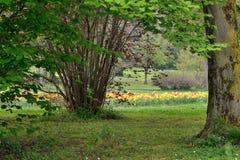 Park in de lente Stock Foto