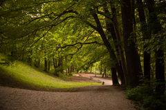 Park in de Lente Royalty-vrije Stock Afbeelding