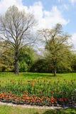 Park in de lente met tulpenbloembed Stock Foto